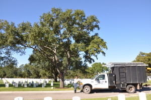 Tree Trimming Techniques in San Antonio
