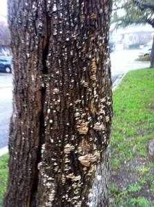 tree fungus growing on tree