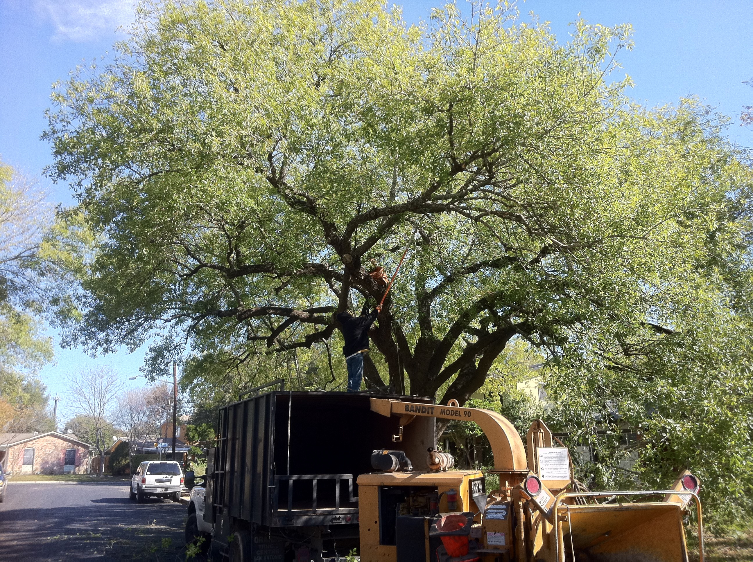 Tree pruning-Canopy Tree Service & Tree Pruning Reasons Are Many--Canopy Tree Service (210) 441-7071