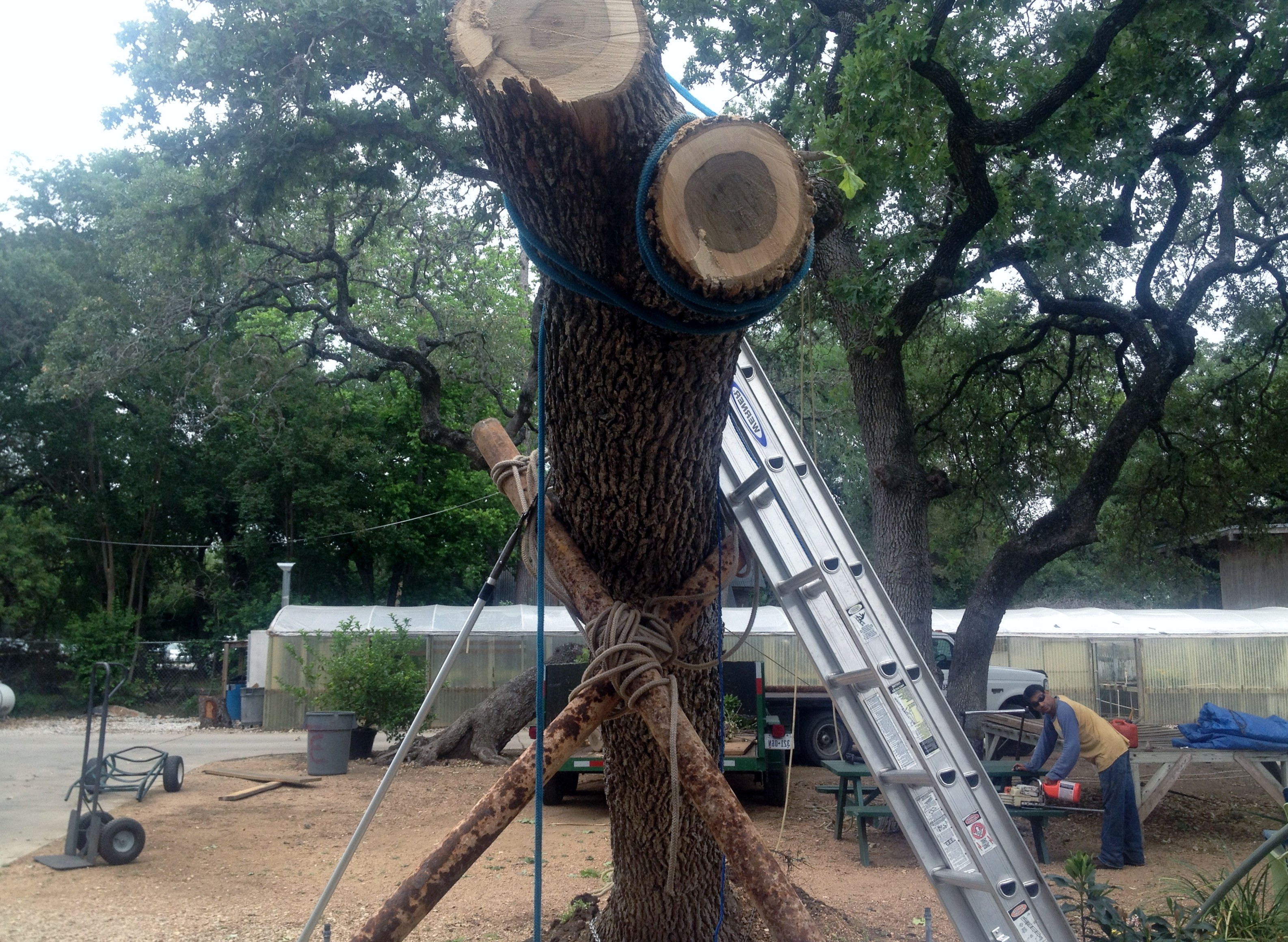 tree removal techniques & Tree Removal Techniques-Canopy Tree Service in SATX (210) 441-7021
