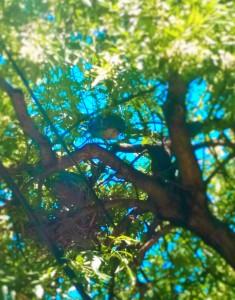 SA Tree Wildlife