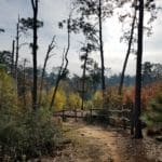 Visiting Bastrop State Park with Burned Pines